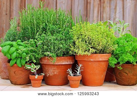 various fresh herbs are in clay pots in front of a weathered wooden wall