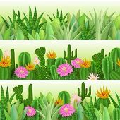 Cacti and succulents. Three seamless background with Succulents cacti succulents and cacti together. Vector nature illustdation. poster