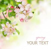 Spring Blossom border poster