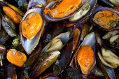 Raw Mussels from the fish market . poster