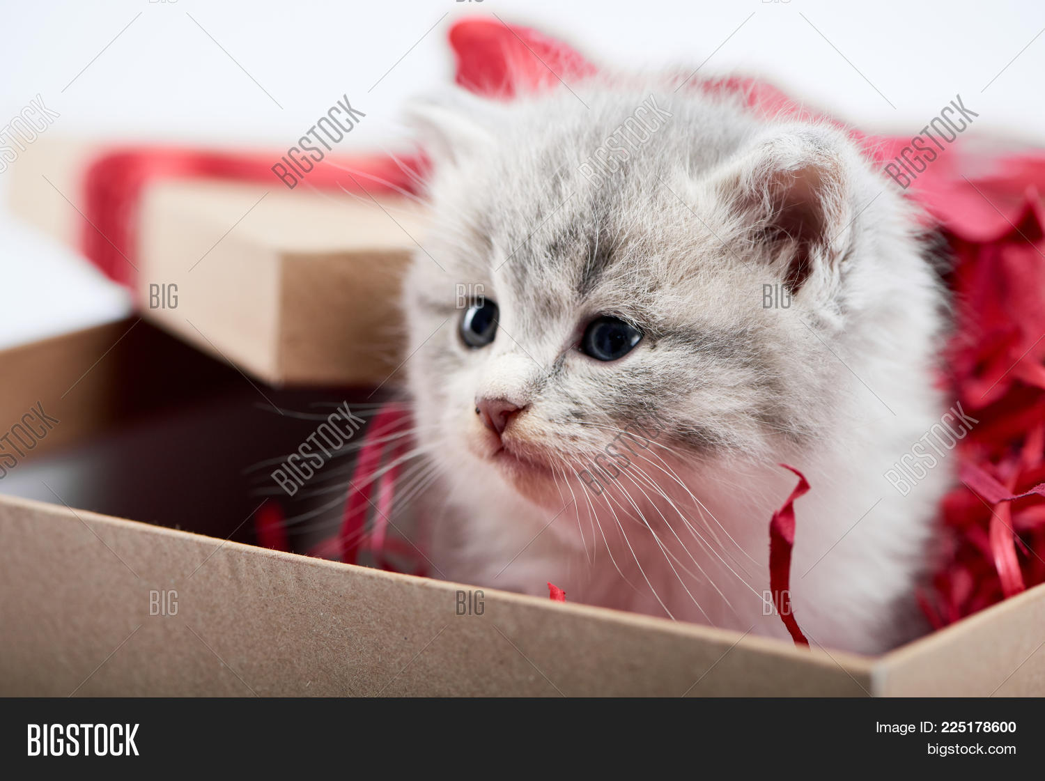 Closeup Of Little Cute Fluffy Grey Kitten Sitting In Decorated Cardboard Borthday Box As Present For