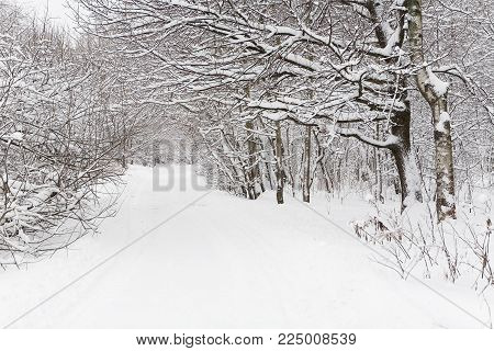 Winter landscape in Izmaylovsky park in the daytime. Moscow.