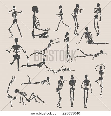 Human skeleton collection. Halloween party design. Silhouettes in various poses