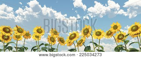 Computer generated 3D illustration with sunflowers against a blue sky with nice weather clouds