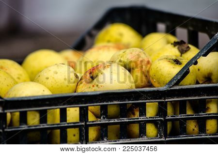 yellow apples in plastic boxes. apple harvest. apples for food textures. many apples.