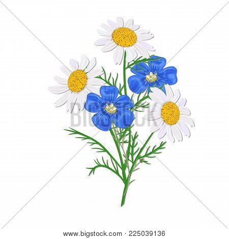 Daisy or chamomile Wildflower isolated with stem. Flax, forget-me-not blue bouquet flowers with stem. nosegay. Vector illustration. Design, health care, cosmetics, postcard, greeting cards, decoration