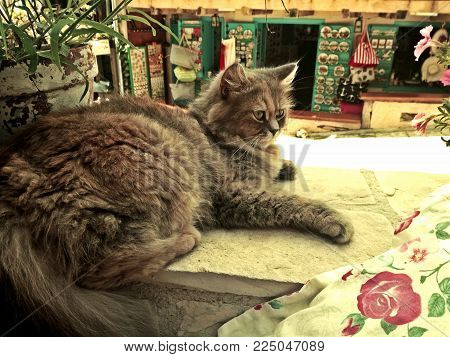 sweet persian cat and souvenirs. Cat rests