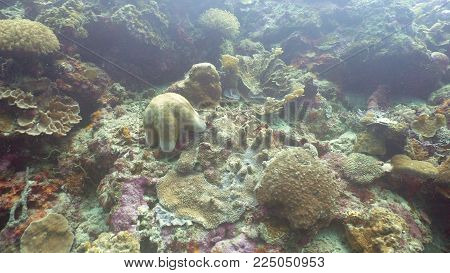 Starfish amongst the coral. Hard and soft corals. Diving and snorkeling in the tropical sea. Travel concept.