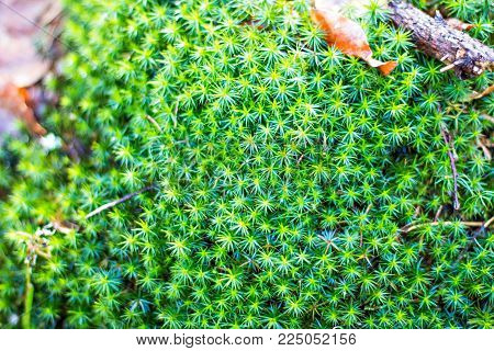 Green Moss Grown Up Cover The Rough Stones In The Forrest. Show With Macro View. Rocks Full Of The M