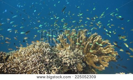 Fish and coral reef. Tropical fish on a coral reef. Wonderful and beautiful underwater world with corals and tropical fish. Hard and soft corals. Diving and snorkeling in the tropical sea. Travel concept.
