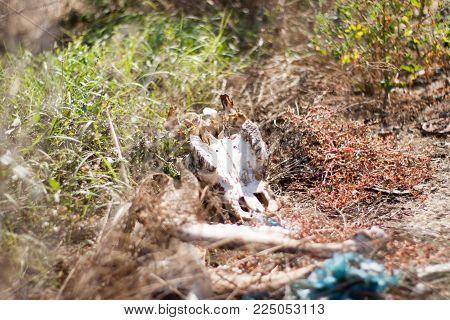 animal bones in a field in the grass