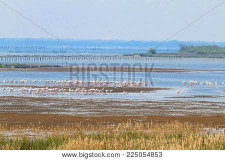 Flock Of Pink Flamingos.po River Lagoon