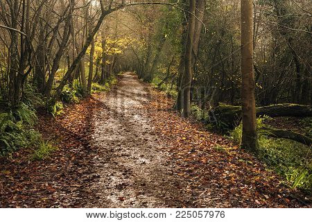 landscape Winter woodland rural Scene, with fallen leaves on footpath
