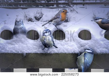 Winter Christmas rural Scene, with snow covered picket fence and garden birds