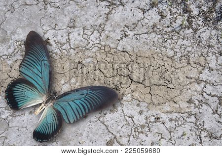 Blue Butterfly On Dry Ground