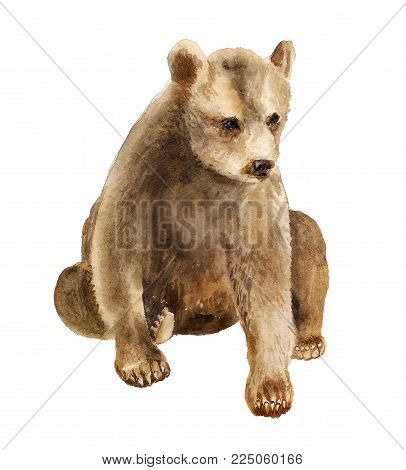 Watercolor image of sitting bear cub on white background
