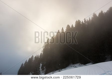 Snow and the dark forest in the mountains