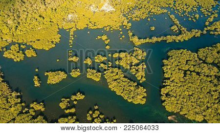 Aerial view of mangrove forest and river on the Siargao island. Mangrove jungles, trees, river. Mangrove landscape. Philippines.