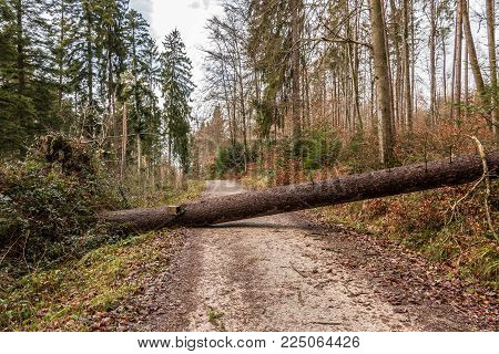 on a tree fallen across the Enter your mobile number or email address below and we'll send you a link to download the free kindle app then you can start reading kindle books on your smartphone, tablet, or computer - no kindle device required.