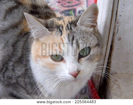 pictures of cats, domestic cats, cat eyes, cat eyes looking cute, emotional eyed cats,