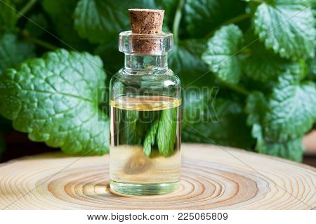 A bottle of melissa (lemon balm) essential oil with fresh melissa twigs in the background