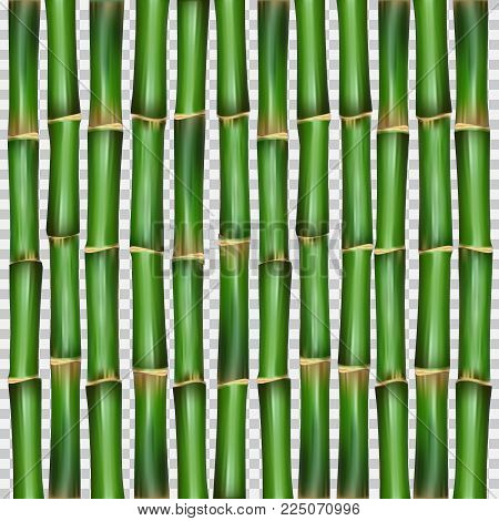Chinese or japanese bamboo grass oriental wallpaper vector illustration. Tropical asian plant background. Image of bamboo poles as wall or curtain. Vector illustration for your design and business.