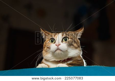 Pretty ginger cat pricked up ears in the alert. Surprised cat, wide opened eyes, funny emotions.