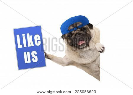 frolic pug puppy dog holding up blue like us sign, hanging sideways from white banner, isolated