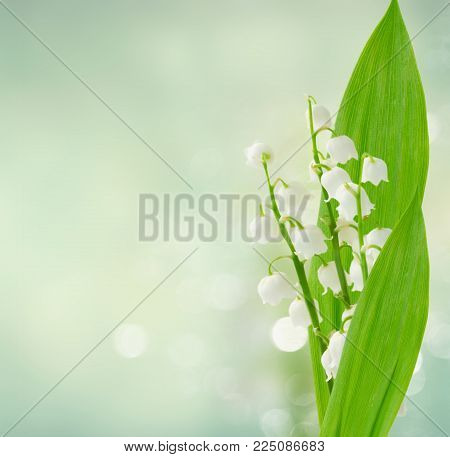 Lilly of the valley flowers and leaves ob blue bokeh background