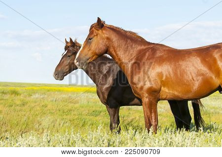 Portrait Of A Wild Horse