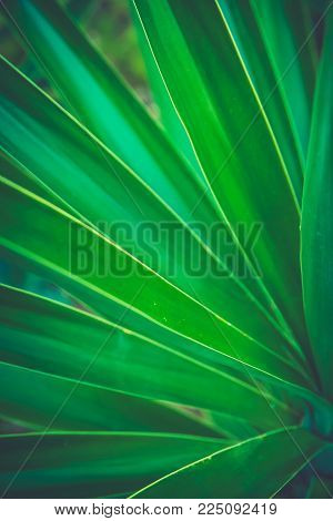 Spiky Palm Tree Striped Leaf Forming Beautiful Natural Geometrical Pattern. Vibrant Colors Trendy Hi