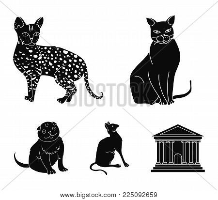 Siamese and other species. Cat breeds set collection icons in black style vector symbol stock illustration .