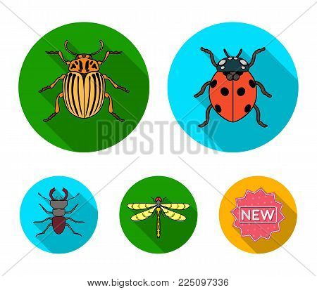 Insect, bug, beetle, paw .Insects set collection icons in flat style vector symbol stock illustration .