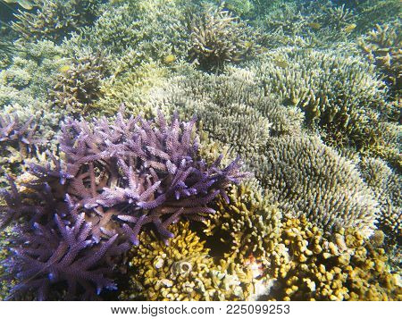 Violet coral in sunlight. Exotic island sea shore. Tropical seashore landscape underwater photo. Coral reef animal. Sea nature. Sea fish in coral. Undersea view of marine life. Coral reef landscape