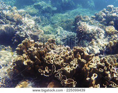 Brown coral in sunlight. Exotic island sea shore. Tropical seashore landscape underwater photo. Coral reef animal. Sea nature. Sea fish in coral. Undersea view of marine life. Coral reef landscape