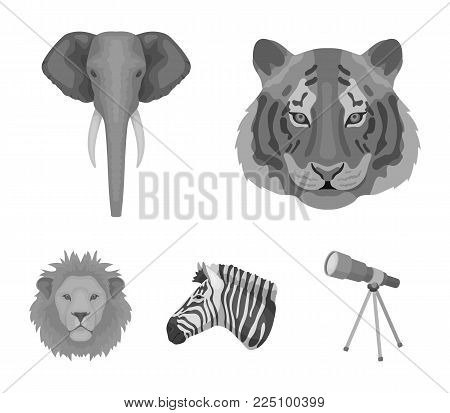 Tiger, lion, elephant, zebra, Realistic animals set collection icons in monochrome style vector symbol stock illustration .