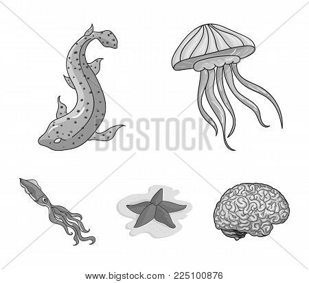 Jellyfish, squid and other species.Sea animals set collection icons in monochrome style vector symbol stock illustration .