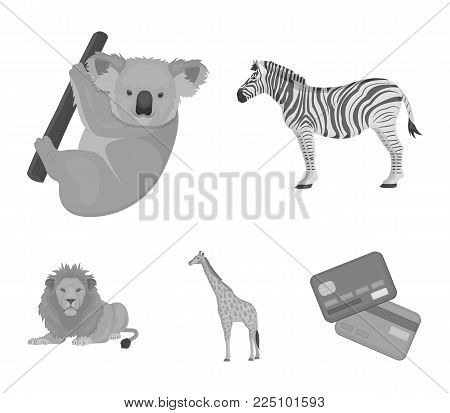 African zebra, animal koala, giraffe, wild predator, lion. Wild animals set collection icons in monochrome style vector symbol stock illustration .