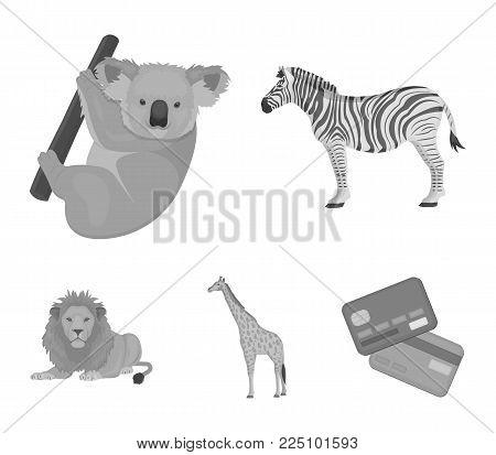 African zebra, animal koala, giraffe, wild predator, lion. Wild animals set collection icons in monochrome style vector symbol stock illustration .