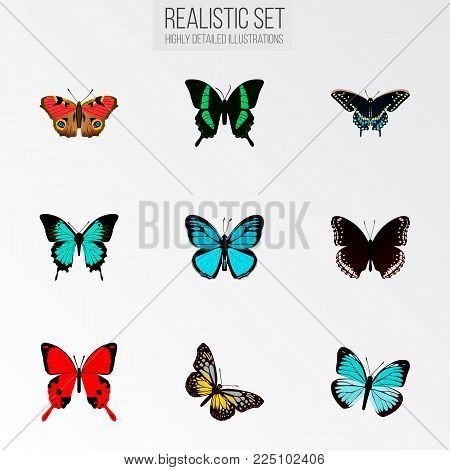 Set of butterfly realistic symbols with spicebush, precis almana, papilio ulysses and other icons for your web mobile app logo design.