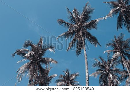 Coco palm tree tropical landscape. Palm skyscape vintage toned photo. Exotic island vacation banner template with text place. Palm tree and blue sky background. Tropic greenery. Palm leaf backdrop