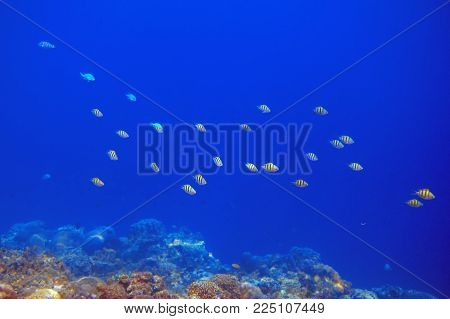Coral reef and colorful tropical fish. Undersea landscape. Fauna and flora of tropical shore. Coral reef underwater photo. Snorkeling in tropic. Exotic island vacation. Aquarium banner template