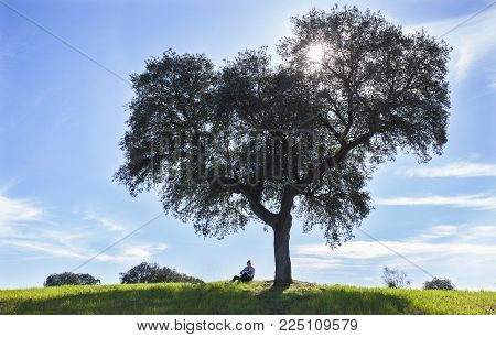 Mother breastfeeding toddler boy under tree of life. Extended breastfeeding in nature concept