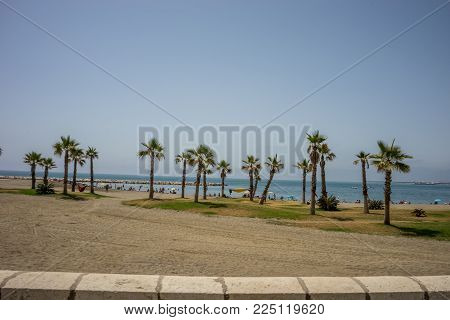 The Top  Of A Palm Tree In The City Of Malaga, Spain, Europe