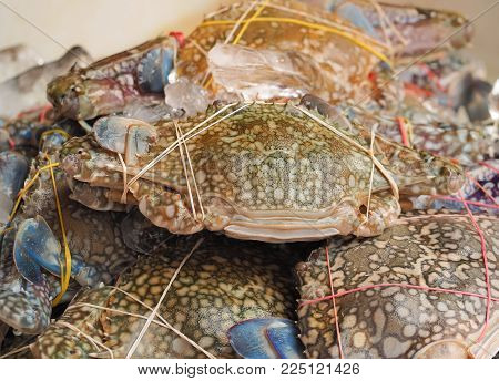 Fresh crabs on ice in seafood market