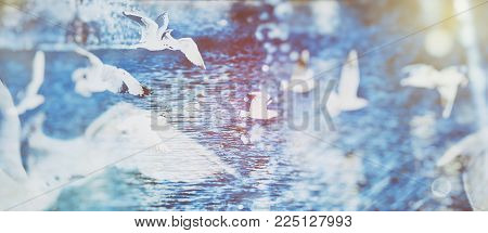 flying white seagulls in a fountain sprays. Double exposure and light leaks added