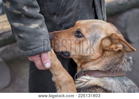 a man holds a dog's paw in his hand, a dog trusts a person, a person trains a dog