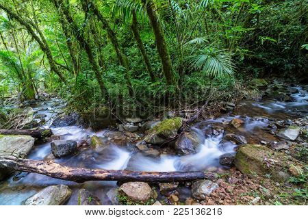 Beautiful stream water flowing down in rain forest. Costa Rica, Central America