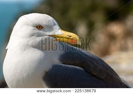 Extreme Close Up Of A Seagull On The Edge Of Cliff Above The Mediterranean Sea