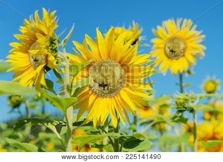 Allegory of the farm for growing bitcoin of the new digital world crypto currency: bitcoin grows like a sunflower in a field